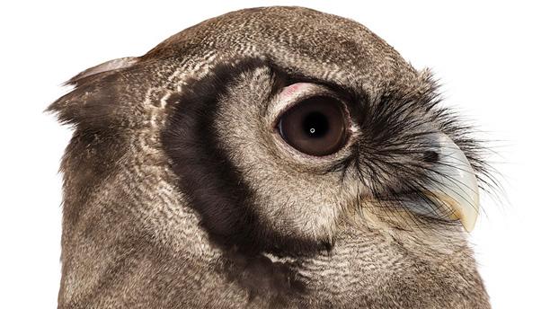 "Andrew Zuckerman ""Bird"""